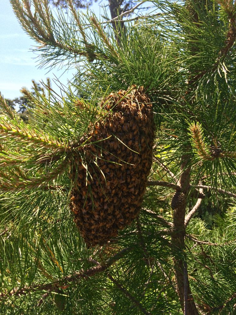 Swarm on a tree