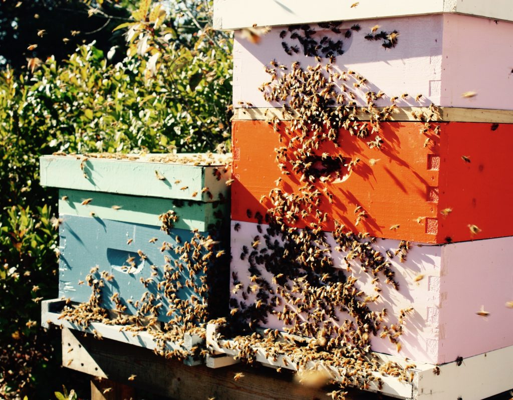 nantucket-bee-local-bees-hive